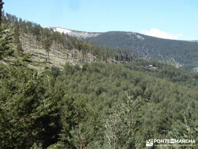 El pinar del Puerto de Navafría;pedraza velas;bosque de irati;taxus baccata